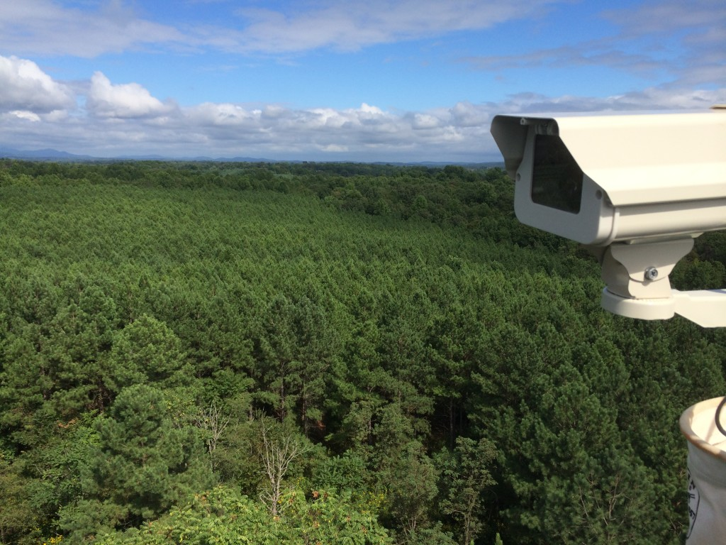 The phenocam tracks the phenology (or timing of the seasons) by measuring the greenness of the forest canopy.